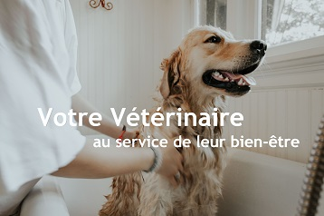 CLINIQUE VETERINAIRE DE LA TANGENTIELLE