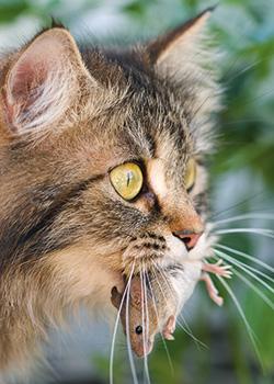 les vers du chat clinique veterinaire de la tangentielle. Black Bedroom Furniture Sets. Home Design Ideas